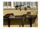 Sokak hayvanı portreleri: Soğuk kış gününde güneş sefası