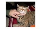 İpucu 4 – Evde kedinize nasıl elle fiziksel muayene yaparsınız?
