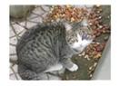 İpucu 5 – Kedilerde en sık görülen hastalıklar