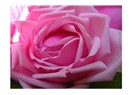 Gül reçeli ve mayıs gülleri