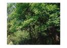 Özel ağaçlandırma gerçeği (1)