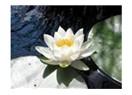 Çiçekle suyun aşkını bilir misiniz