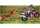 Olağanüstü Hayvanlar - 2