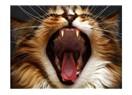 Kedilerin beden dili