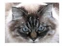 İpucu 7 – Hastalık anında evde evcil hayvanınız için neler yapabilirsiniz?