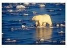 Küresel ısınmaya karşı yetersiz tepkiler