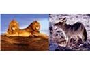 Aslanların hazin sonu mu?