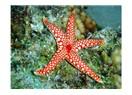 Dostlar  bir deniz yıldızı da siz atarmısınız?