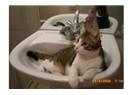 Sevgi kedisi Boncuk
