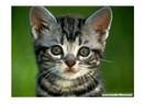 Kediye  giden yol