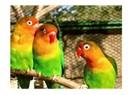Baykal'ın papağanları!