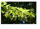 Gripte bitkilerle destek