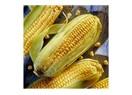 Dikkat!... Genetiği Değiştirilmiş Gıdalar artık etiketsiz!...