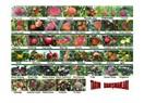 Ülkemizde üretimi yapılan meyve çeşit, tür ve özellikleri