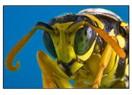 Arılar yok olurken, dünyada...