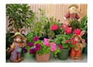 Doğa ve Balkon Bahçeciliği