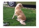 Alaylıdan Köpek Bakımı