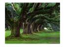 Orman alanlarımız çoğalıyor mu?