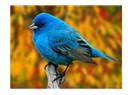 Kuşlarda ruhaniyet bulmak