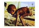 '' Somali'deki Açlık'' İstismarı