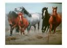 At ve yılkı atlarının özgürlüğü