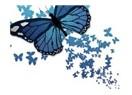 Kelebek Sevdası