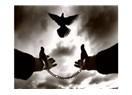 Referandum; Özgürlükten Kaçış veya Uzlaşamamak