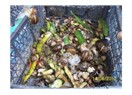 Sebze artıklarından besin eriyikleri hazırlama (Salyangoz dışkısı)