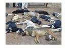 Zehirlenen köpekler çöplüğe atılan kedi yavruları