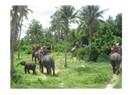 Tayland gezi notlarım 4