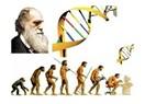 Karışık bitkisel çaylı evrim teorisi