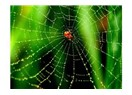 Doğada şekil hafızasına sahip bilinen tek madde; örümcek ipliği