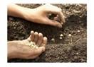Tohum üretmek artık yasak!..