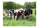 Hayvancılık hibe projeleri