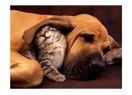 Kedilerle köpeklerin farkı