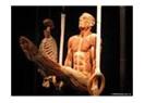 """""""Body World: Orijinal Vücut Sergisi"""""""