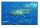 Köpekbalığı derisi gemi endüstrisine yol gösteriyor