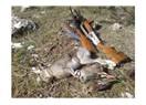 Ülkemizde bulunan yaban hayvanlarını avlama cezaları
