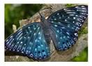 Kelebekler İstanbul'u istila etti