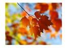 Yaprağın hikayesi