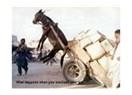 Allah Yanında; Fille Karıncanın, Aklını kullanmayan İnsanla Eşeğin Hiç Bir Farkı Yoktur