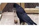 """""""Kuş beyinli"""" demek iltifat mı oluyor?"""