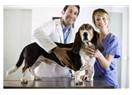 Holistik veteriner hekimlere ihtiyacımız var!