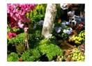 Bayındır Çiçek Festivali 1-3 Mayıs 2009