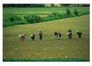 Çiftçinin hayal yılları