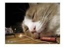 İnsanlar, kediler ve fareler.