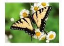 Kelimeler ve kelebekler