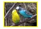 Kafes Kuşlarında Düzenli Dışkı Kontrolü