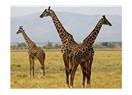 Tanzanya gezi notları