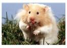 Bir fareyi sevebilmek